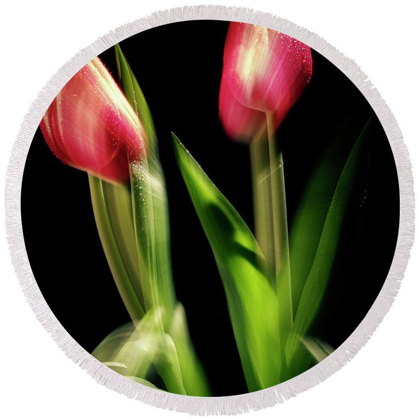 Tulips Round Beach Towel featuring the photograph Starting To Bloom by Frederic A Reinecke