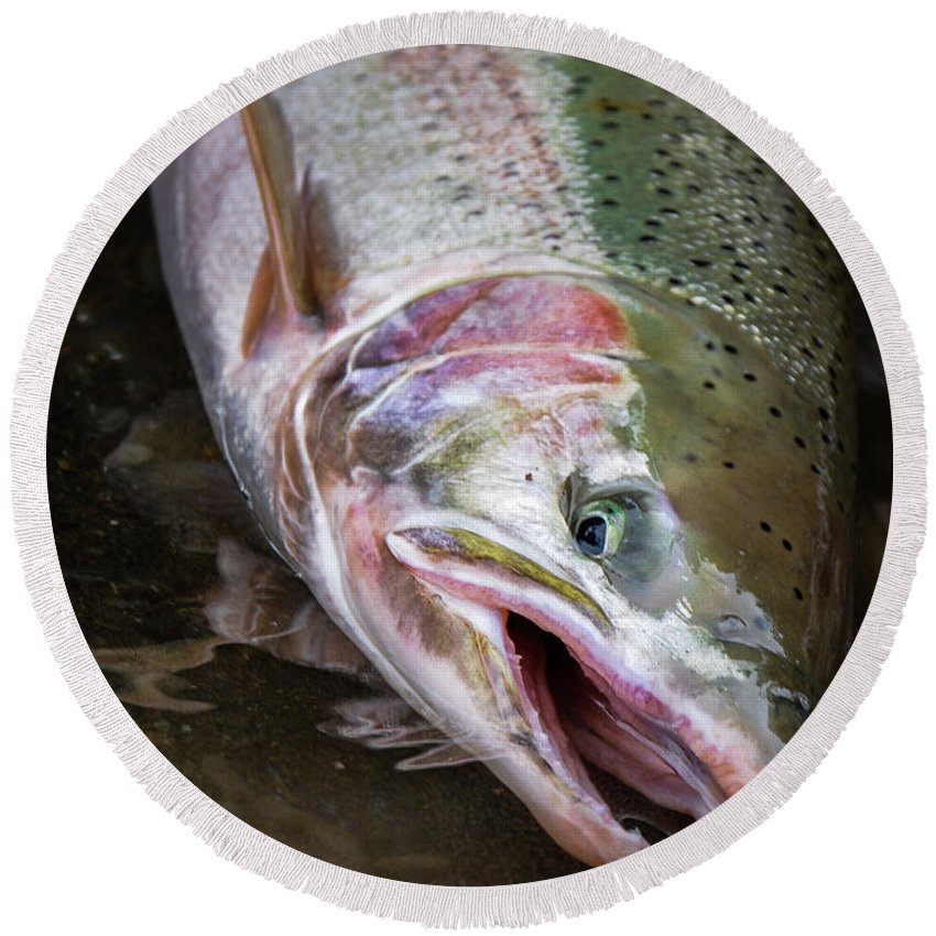 Fishing Round Beach Towel featuring the photograph Steelhead 1 by Jason Brooks