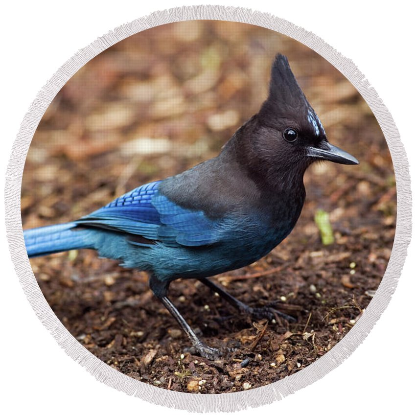 Steller's Jay Round Beach Towel featuring the photograph Stellar's Jay II by Randall Ingalls