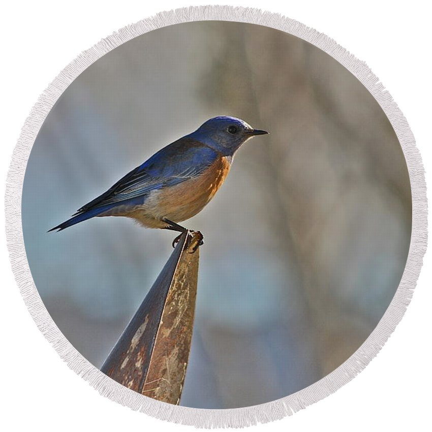 Bird Round Beach Towel featuring the photograph Stopping On A Shovel by Diana Hatcher
