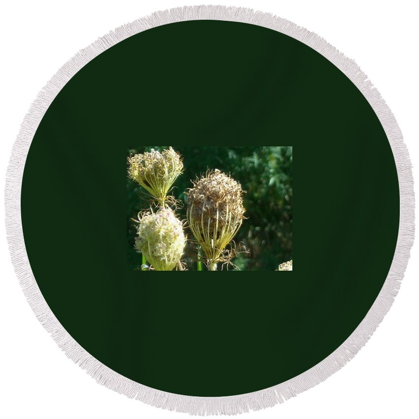 Round Beach Towel featuring the photograph Strange Flowers by Line Gagne