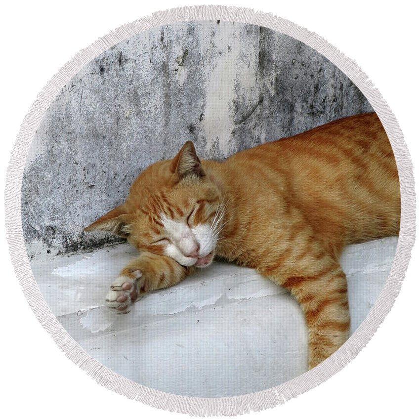 Animal Round Beach Towel featuring the photograph Stray Cat Sleeps On The Floor-2 by Tana Kosiyabong