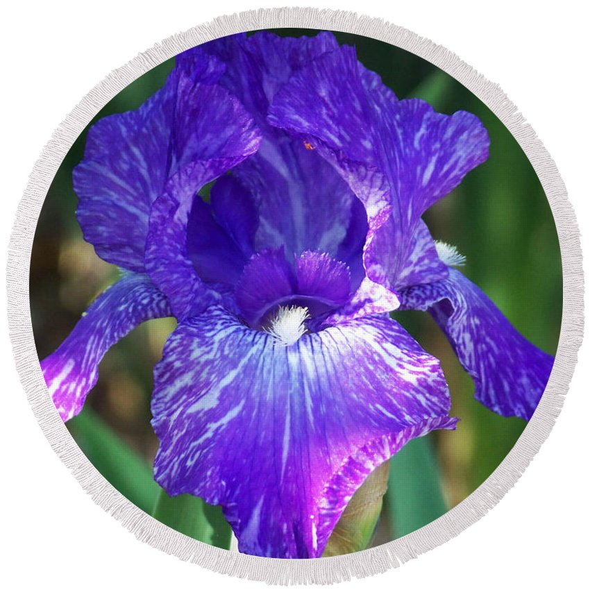 Flowers Round Beach Towel featuring the photograph Striped Blue Iris by Kathy McClure