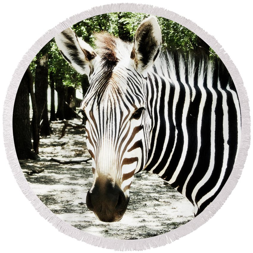 Zebra Round Beach Towel featuring the photograph Stripes And Symmetry by Douglas Barnard