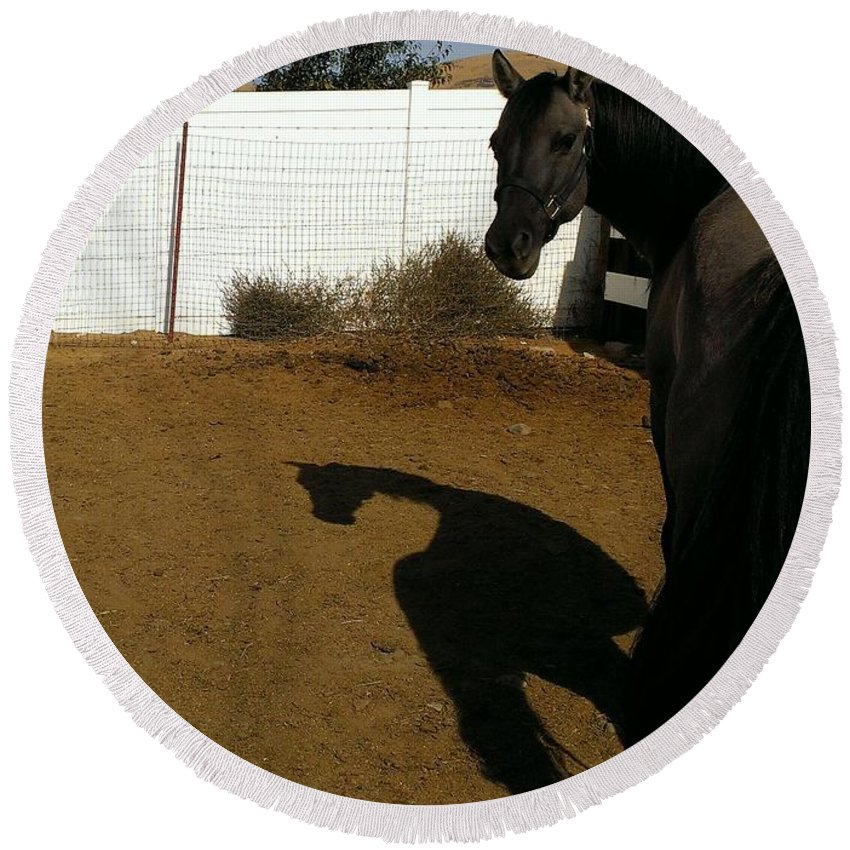Horse Round Beach Towel featuring the photograph Stubborness by LKB Art and Photography