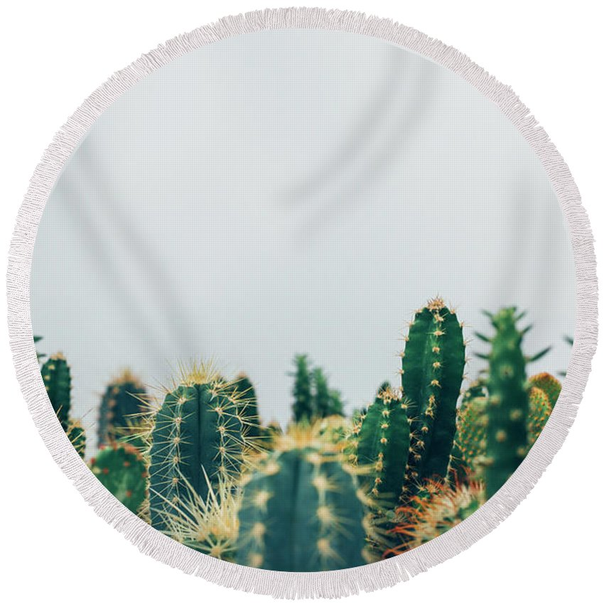 Succulents Round Beach Towel featuring the photograph Succulents by Happy Home Artistry