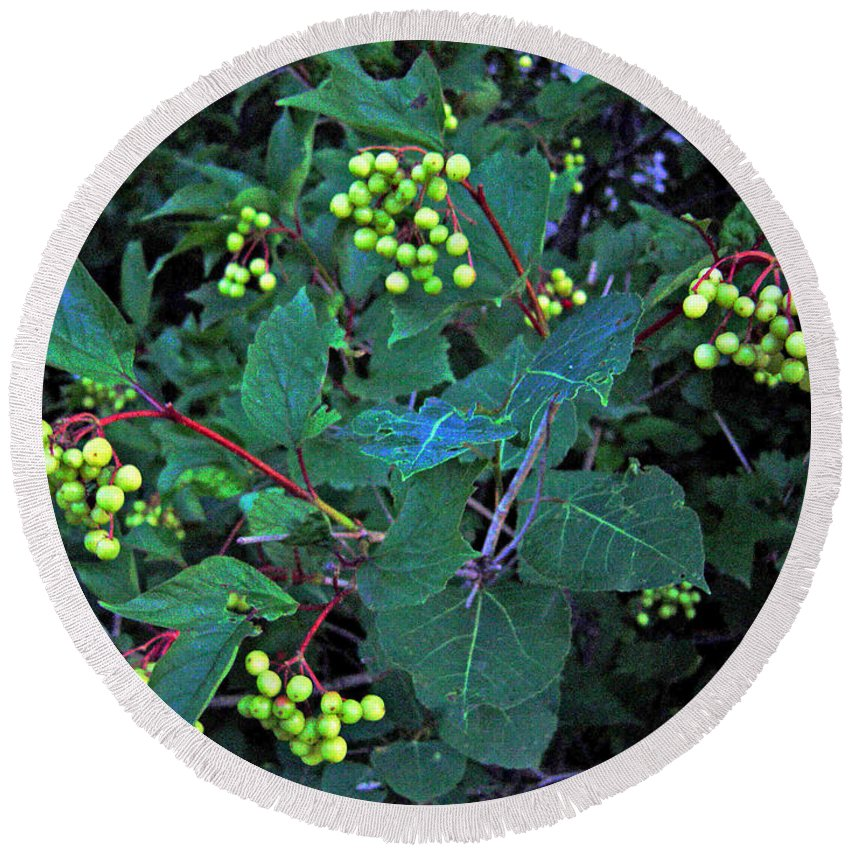 Hi Bush Cranberries And Leaves Round Beach Towel featuring the photograph Summer Berries by Joanne Smoley