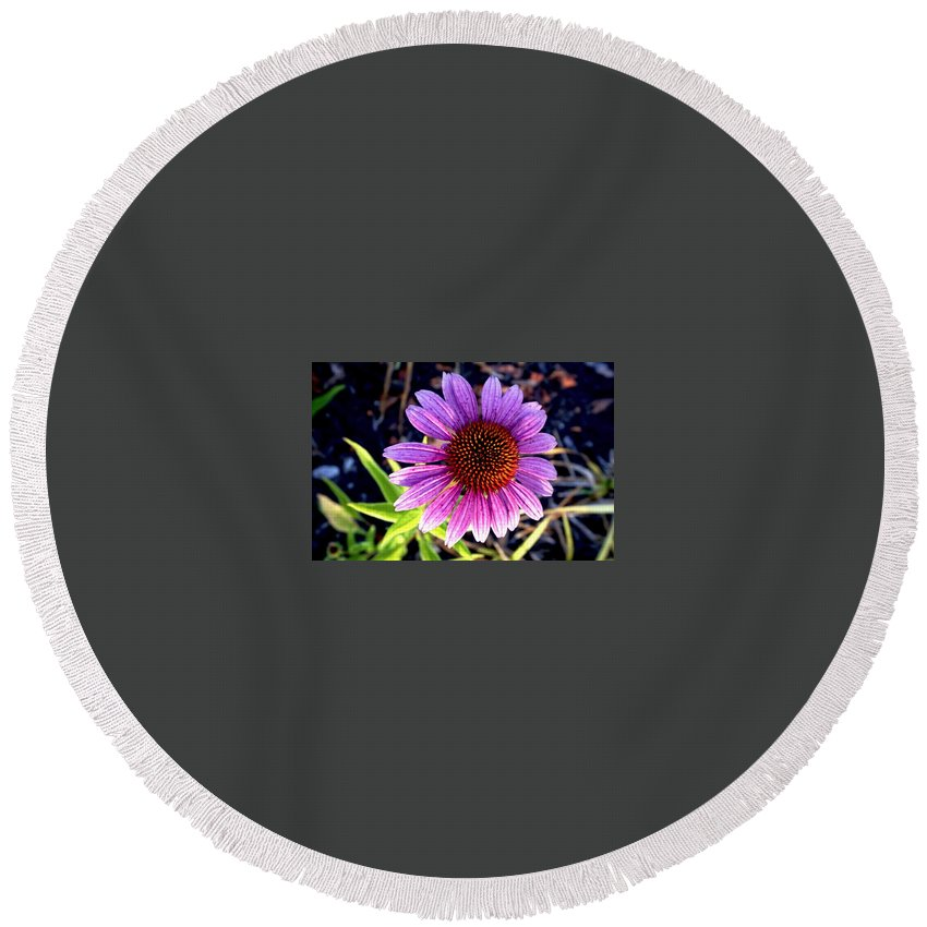 Summer Flowers Round Beach Towel featuring the photograph Summer Flower In Fading Light by Doug Terry