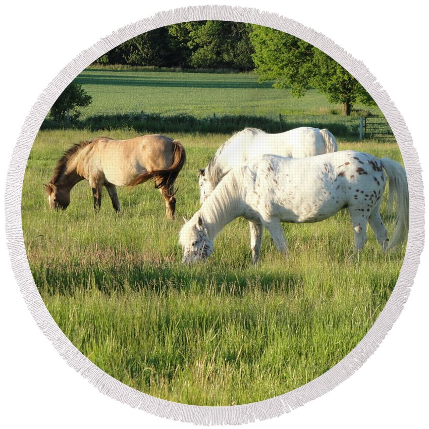 Pony Round Beach Towel featuring the photograph Summer Grazing by Susan Baker