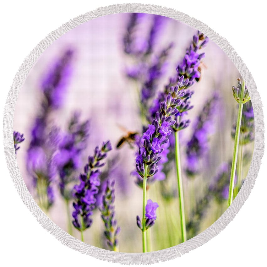 Lavender Round Beach Towel featuring the photograph Summer Lavender by Nailia Schwarz