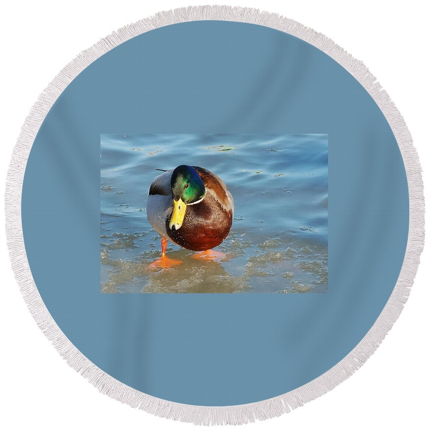Duck Round Beach Towel featuring the photograph Sumo Wrestler by Yuri Hope