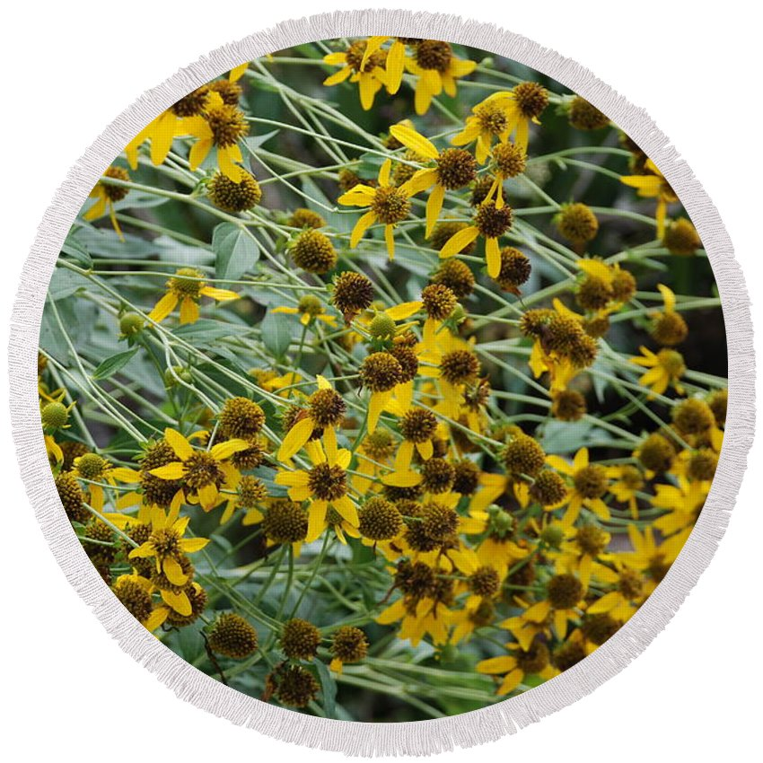 Macro Round Beach Towel featuring the photograph Sun Flowers by Rob Hans