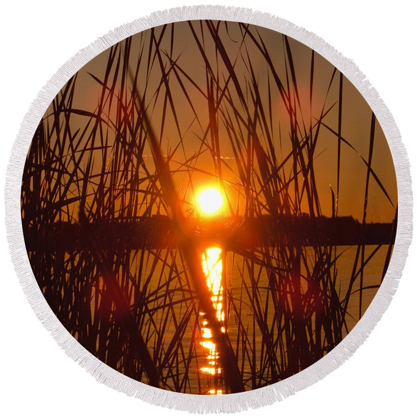 Reeds Lake Water Sunset Sunshine Nature Round Beach Towel featuring the photograph Sun In Reeds by Andrea Lawrence