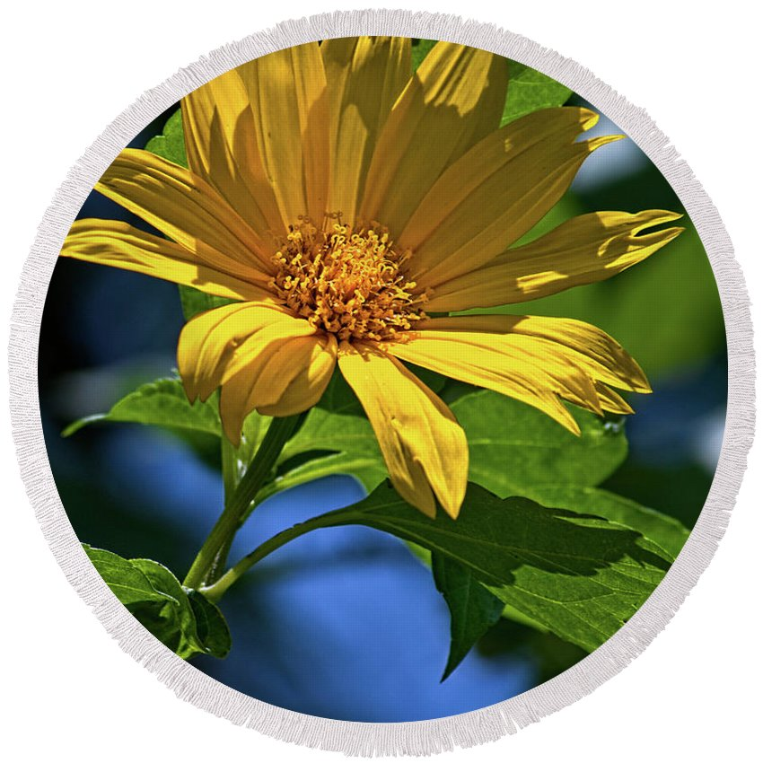 Flower Round Beach Towel featuring the photograph Sun Yellow by Christopher Holmes