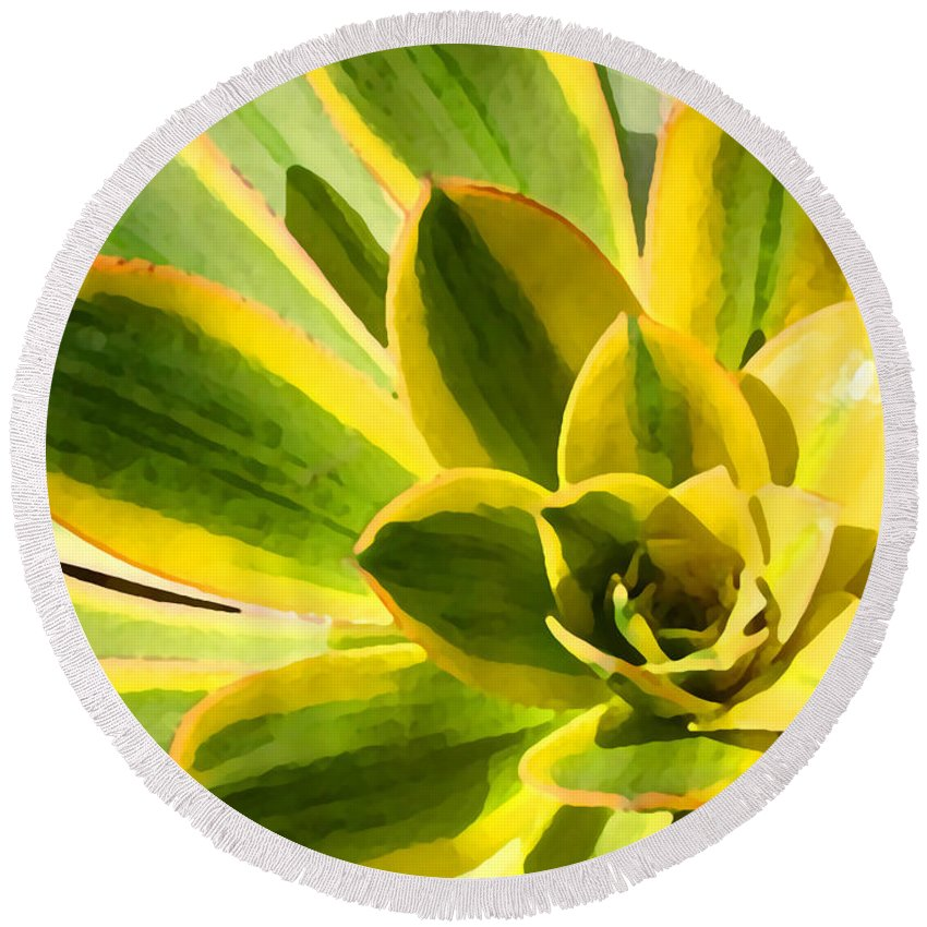 Landscape Round Beach Towel featuring the photograph Sunburst Succulent Close-up 2 by Amy Vangsgard