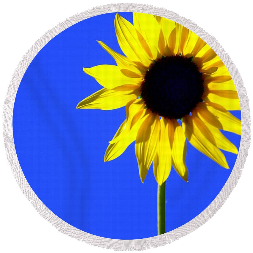Flowers Round Beach Towel featuring the photograph Sunflower 2 by Marty Koch