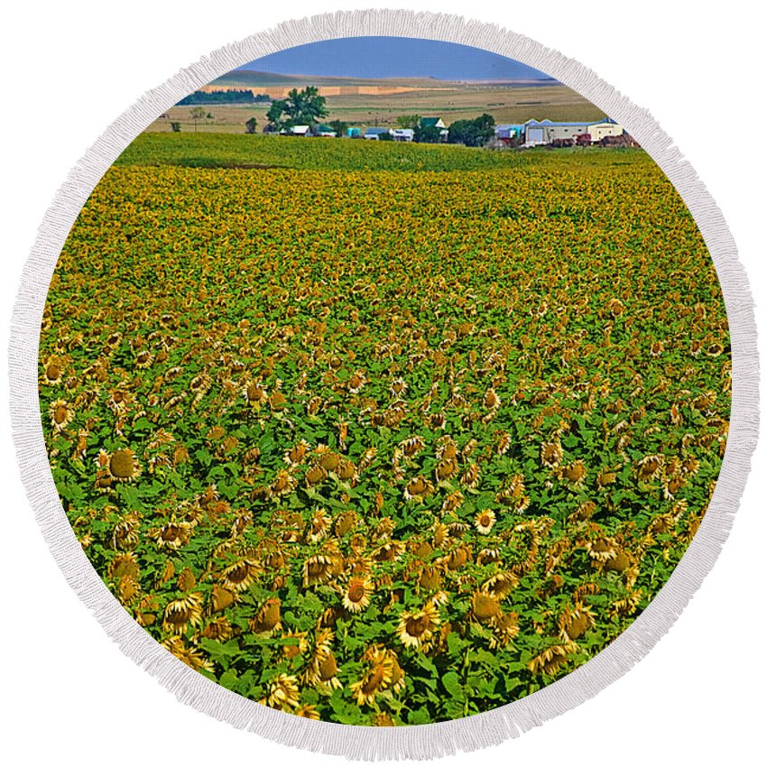 Sunflower Farm In Northwest North Dakota Round Beach Towel featuring the photograph Sunflower Farm In Northwest North Dakota by Ruth Hager