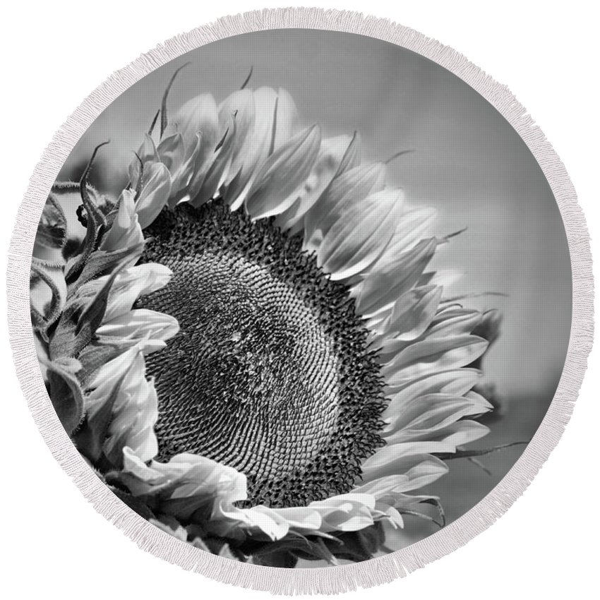 Sunflower Round Beach Towel featuring the photograph Sunflower In Black And White by Smilin Eyes Treasures