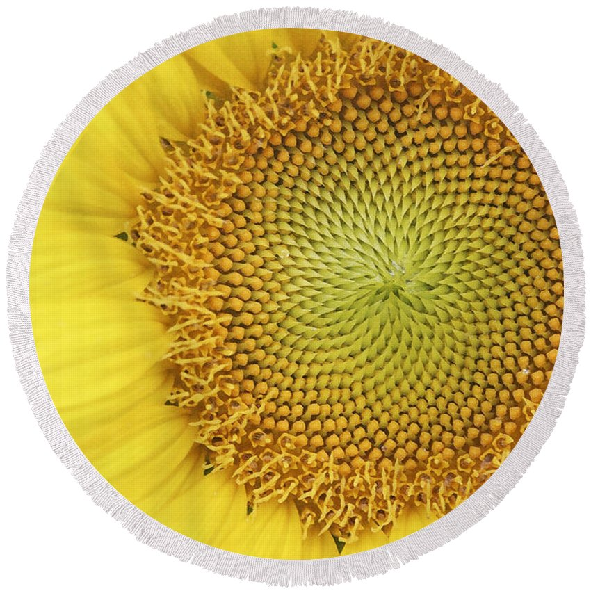 Sunflower Round Beach Towel featuring the photograph Sunflower by Margie Wildblood