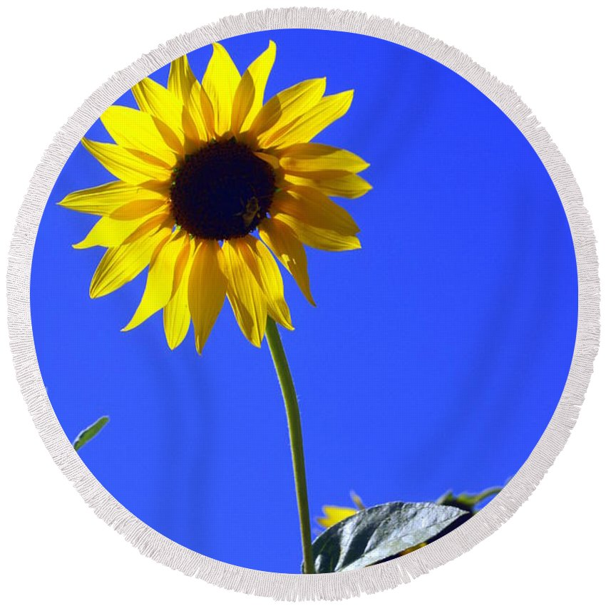 Flowers Round Beach Towel featuring the photograph Sunflower by Marty Koch