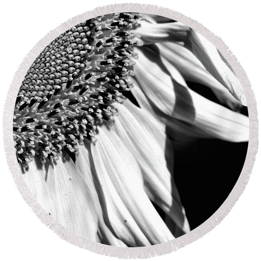 Sunflower Round Beach Towel featuring the photograph Sunflower Petals In Black And White by Smilin Eyes Treasures