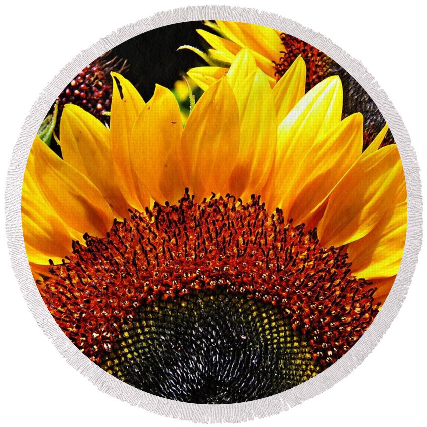 Sunflower Round Beach Towel featuring the photograph Sunflower Rise by Sarah Loft