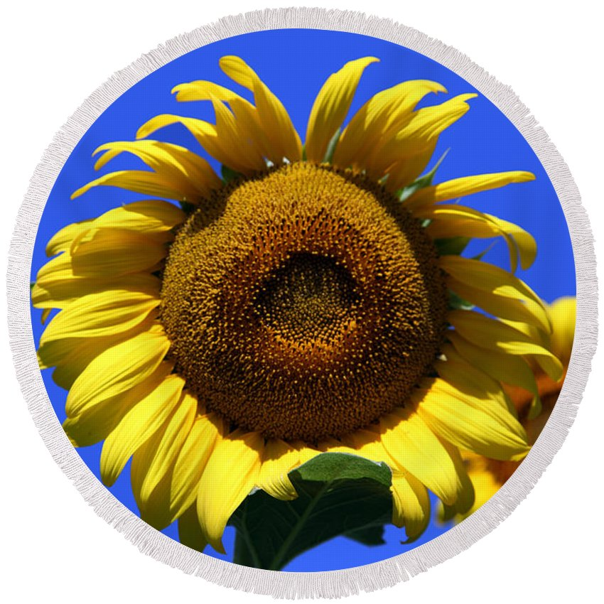 Sunflowers Round Beach Towel featuring the photograph Sunflower Series 09 by Amanda Barcon