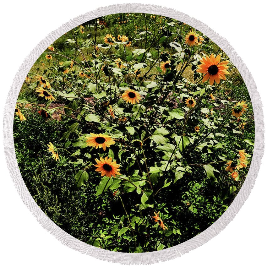 Flowers Round Beach Towel featuring the photograph Sunflower Stalks by Scott Sawyer