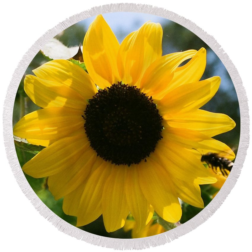 Flower Round Beach Towel featuring the photograph Sunflower With Bee by Dean Triolo