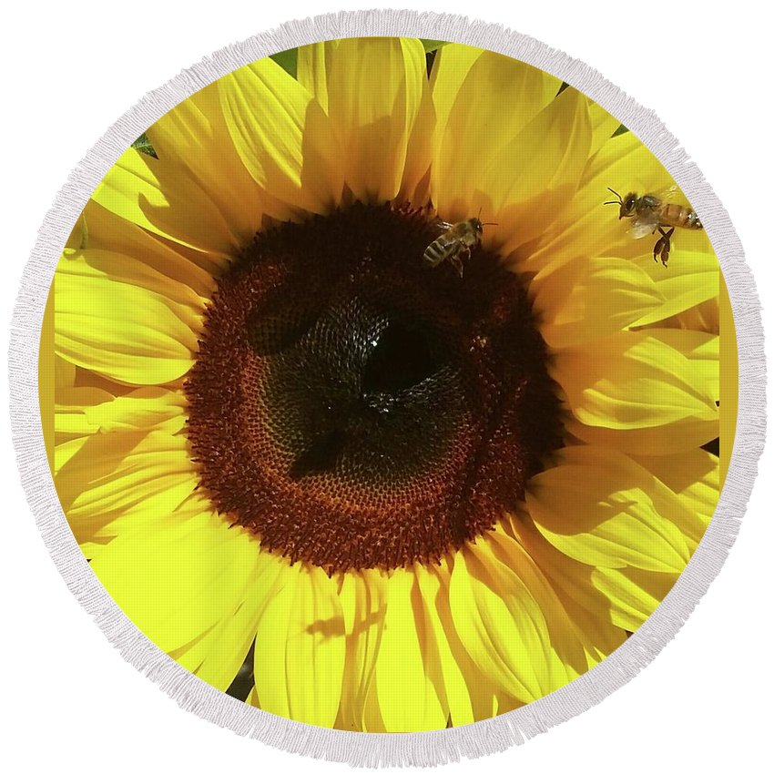 Sunflower Sunflowers Bee Bees Honey Sun Flower Round Beach Towel featuring the photograph Sunflower With Bees by Christina Marie