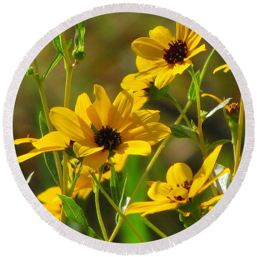 Sunflowers Round Beach Towel featuring the photograph Sunflowers Along The Trail by Barbara Bowen