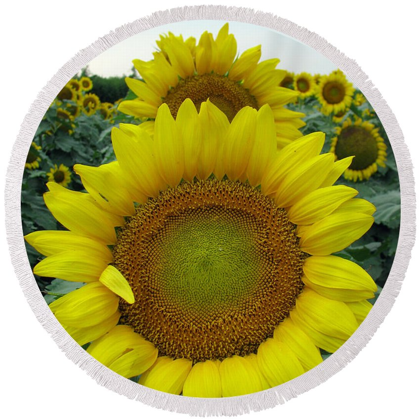 Sunflowers Round Beach Towel featuring the photograph Sunflowers by Amanda Barcon