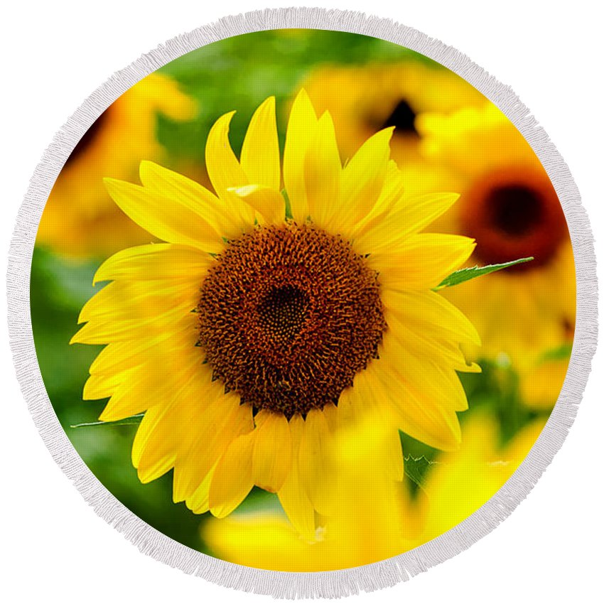 Lee Round Beach Towel featuring the photograph Sunflowers I by Greg Fortier