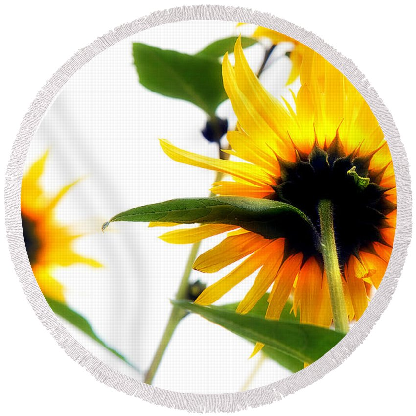 Sunflowers Round Beach Towel featuring the photograph Sunflowers by Mal Bray