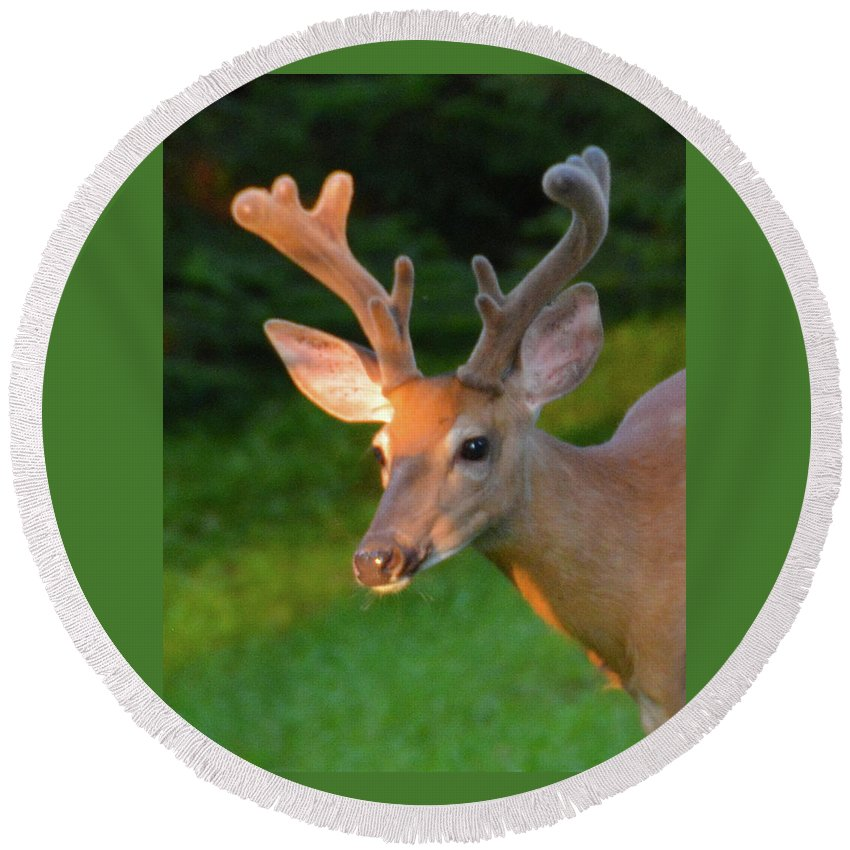 Buck Round Beach Towel featuring the photograph Sunkissed Buck by Christine Dekkers