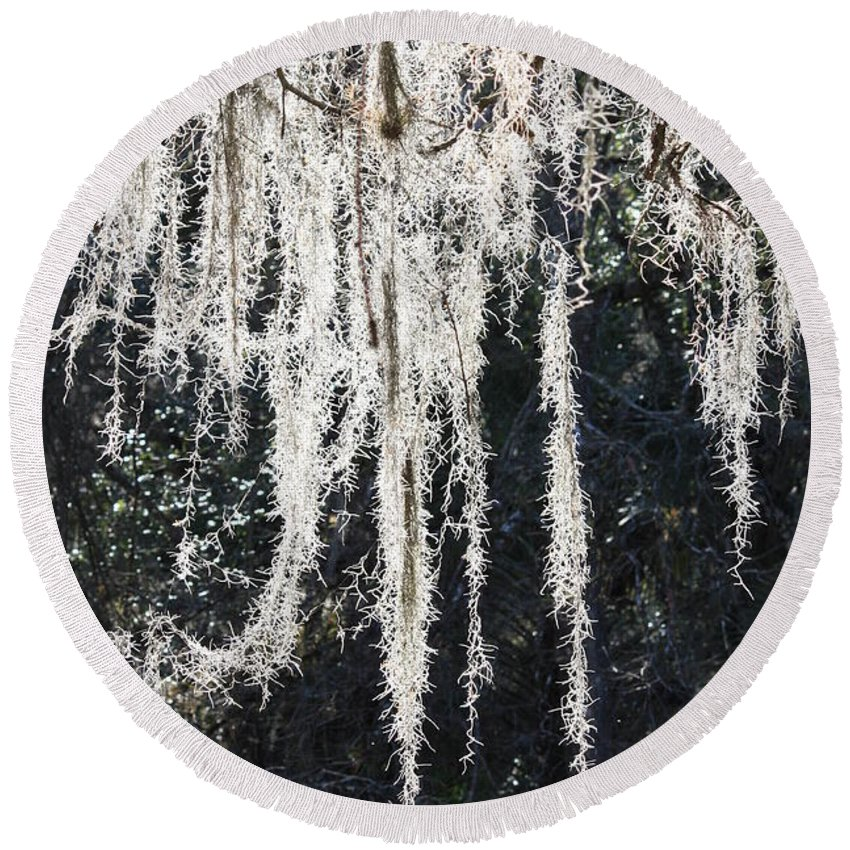 Mossy Round Beach Towel featuring the photograph Sunlight Through Spanish Moss by Carol Groenen