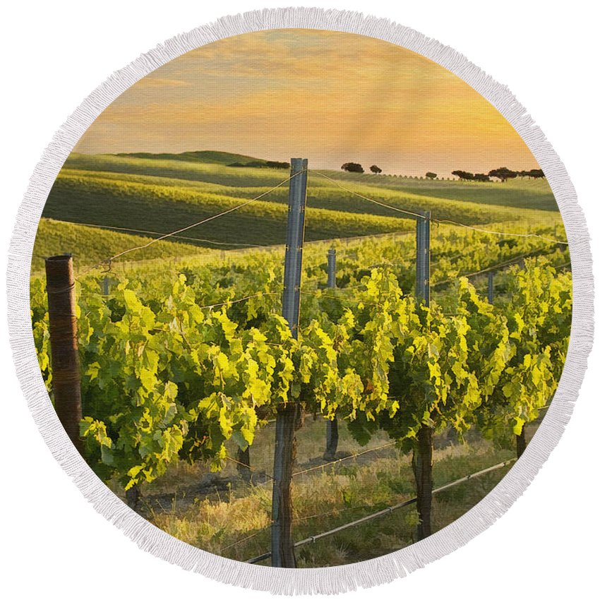 Vineyard Round Beach Towel featuring the photograph Sunlit Vineyard by Sharon Foster