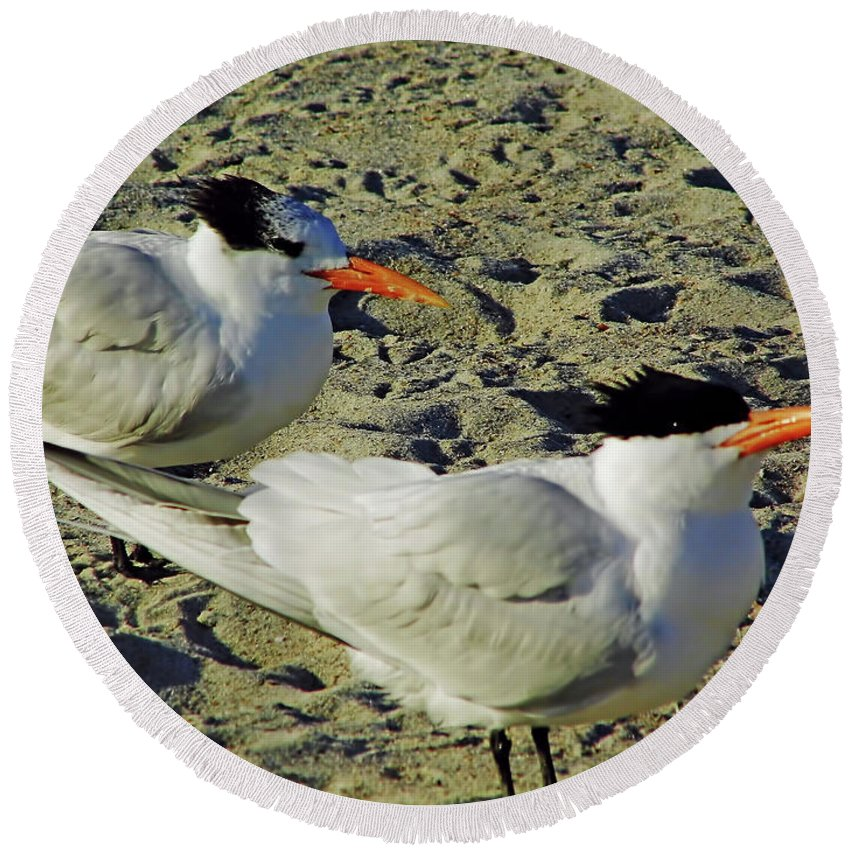 Tern Round Beach Towel featuring the photograph Sunning Terns by D Hackett