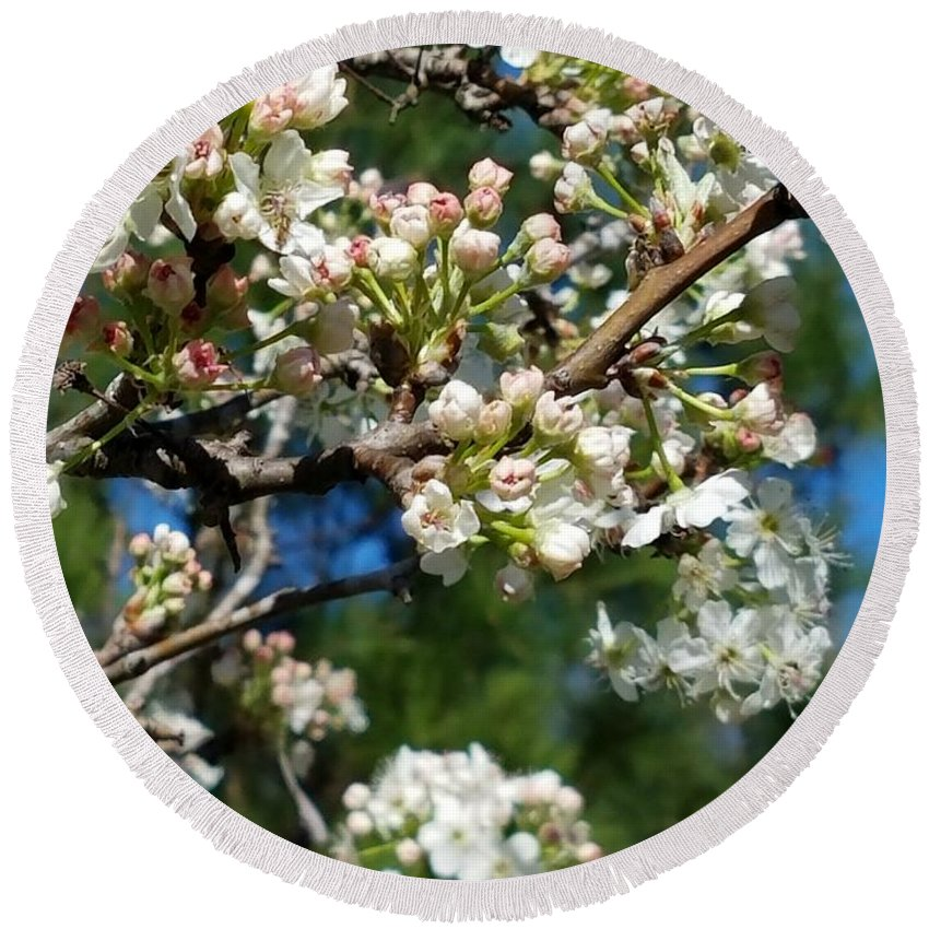 Sunny Pear Blossoms Round Beach Towel featuring the photograph Sunny Pear Blossoms by Maria Urso