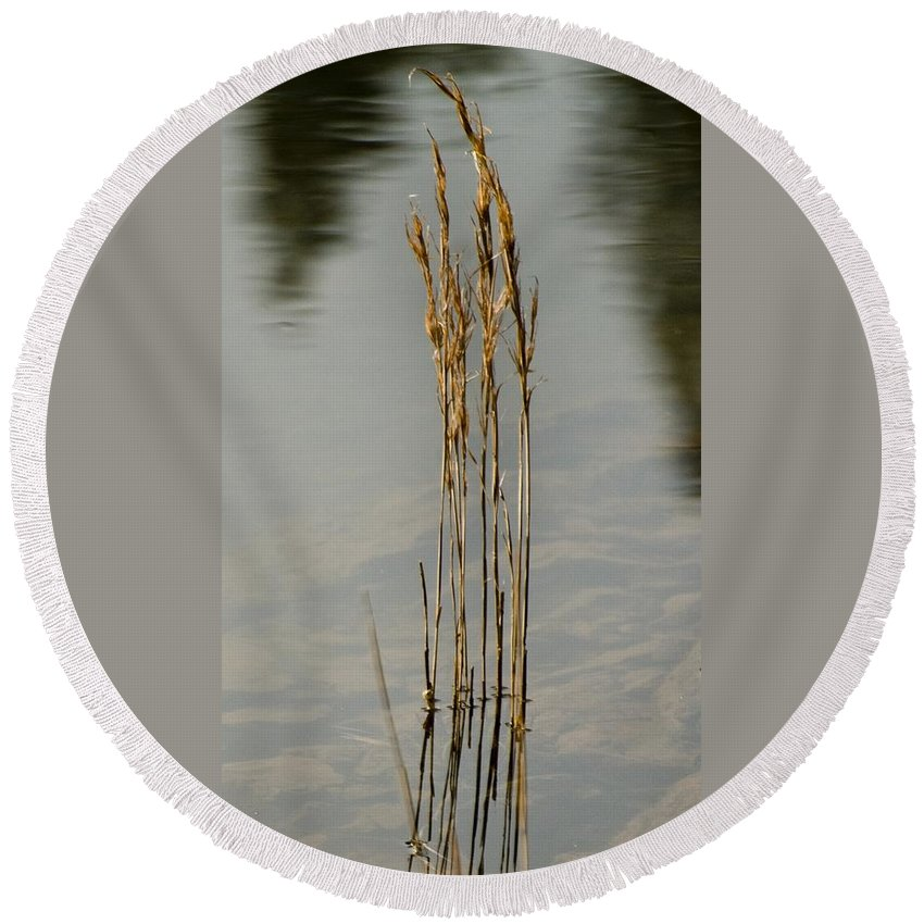 California Scenes Round Beach Towel featuring the photograph Sunny Reeds Reflect by Norman Andrus