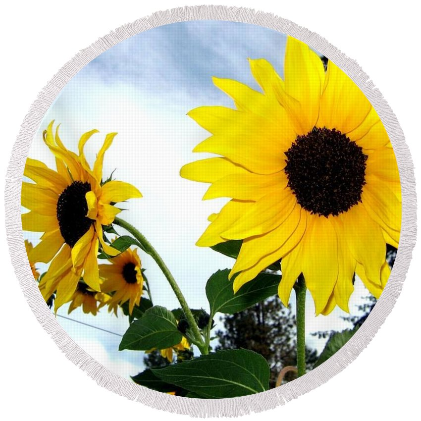 Sunflowers Round Beach Towel featuring the photograph Sunny Slopes by Will Borden