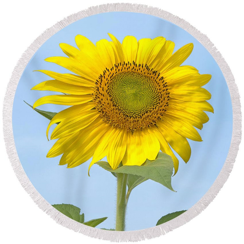 Sunflower Round Beach Towel featuring the photograph Sunny Sunflower by Ann Horn