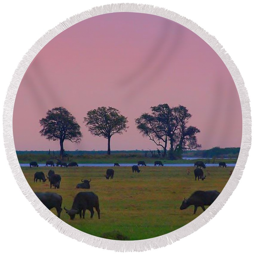 Chobe River Round Beach Towel featuring the photograph Sunset Grazing by Stacie Gary