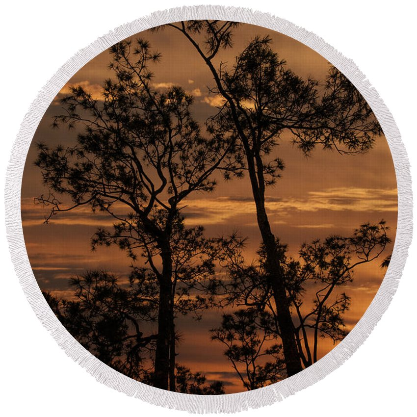 Pine Round Beach Towel featuring the photograph Sunset In The Pine Woods by Mitch Spence