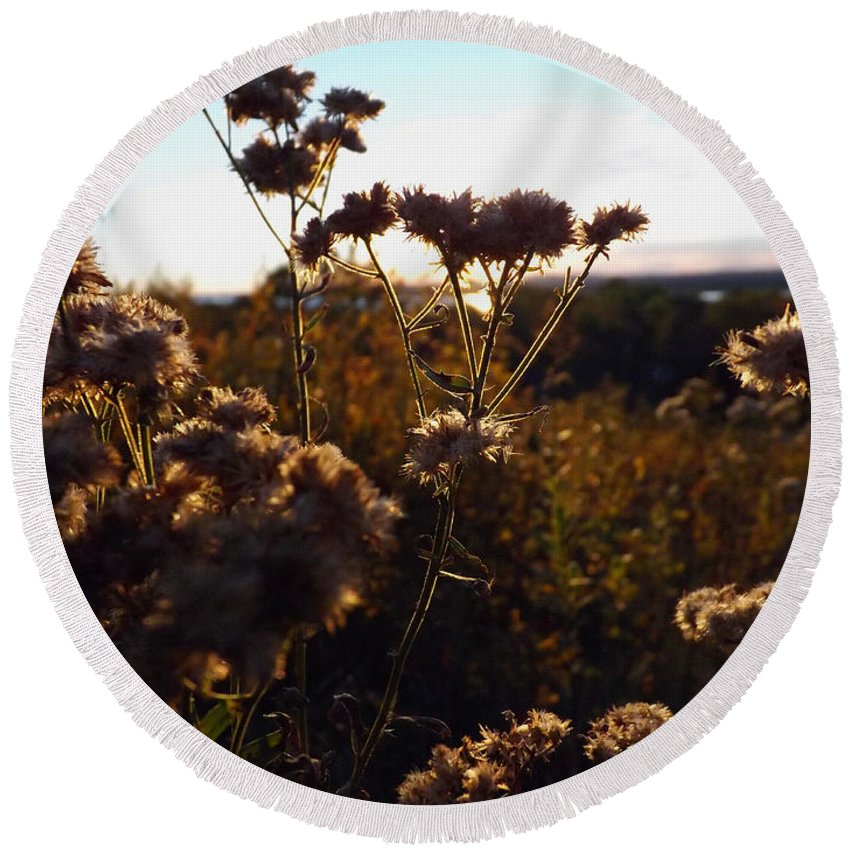 Macro Round Beach Towel featuring the photograph Sunset Through The Flowers by Samuel Forestell Photography