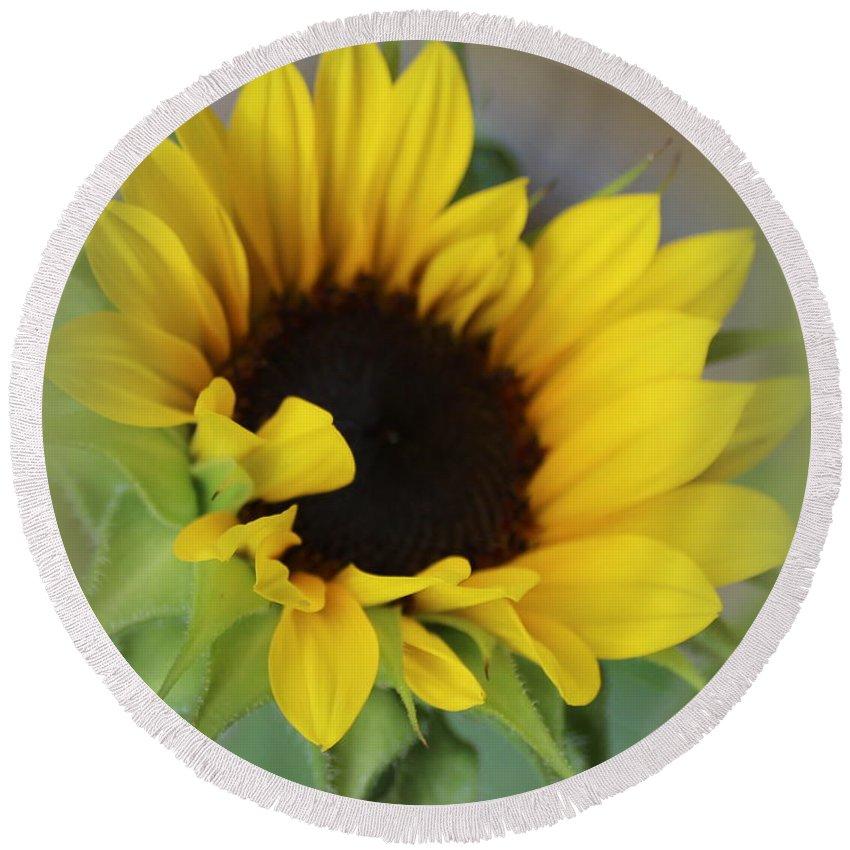 Sunflower Round Beach Towel featuring the photograph Sunshine Beauty - Sunflower by Dora Sofia Caputo Photographic Design and Fine Art