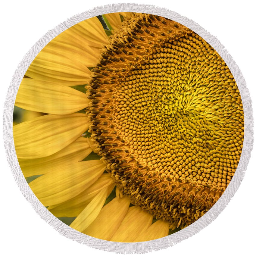 Sunflower Round Beach Towel featuring the photograph Sunshine Flower by Linda D Lester