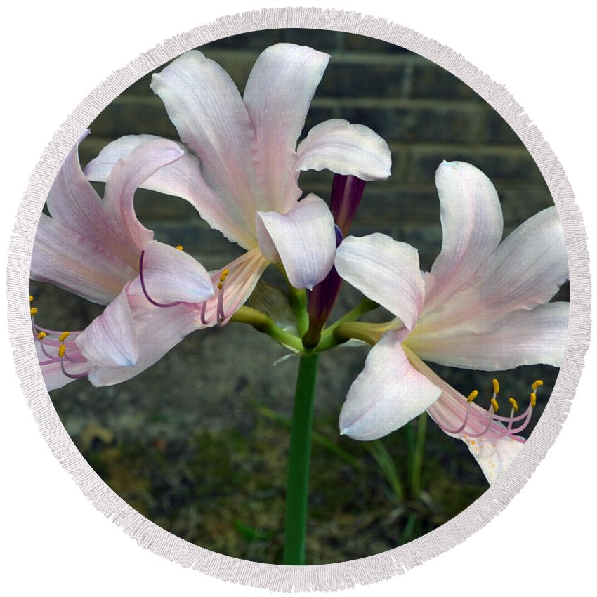 Surprise Lilies Round Beach Towel featuring the photograph Surprise Lilies by James Pinkerton