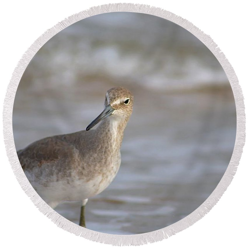 Willet Round Beach Towel featuring the photograph Suspicious Willet by Janna Nace