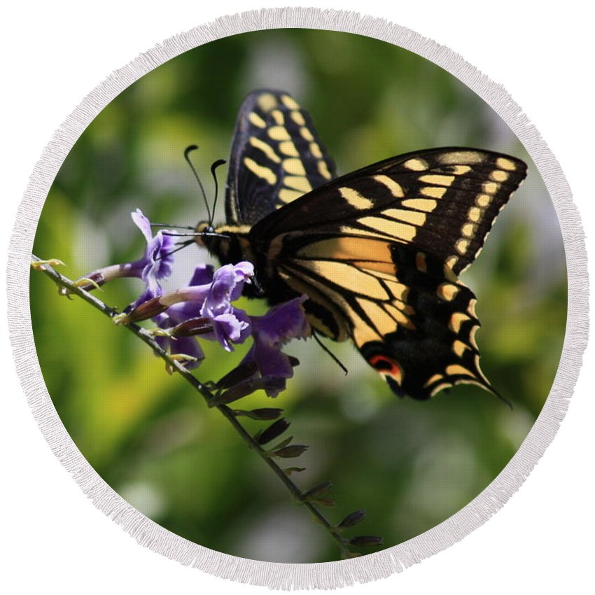 Swallowtail Butterfly Round Beach Towel featuring the photograph Swallowtail Butterfly 1 by Carol Groenen